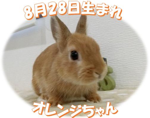 8月28日生まれNDオレンジちゃん