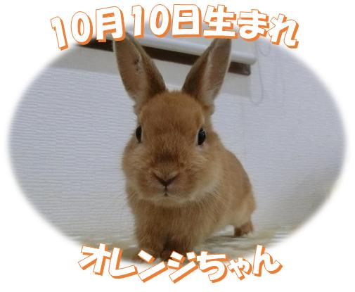 10月10日生まれNDオレンジちゃん