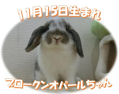 11月15日生まれHLBKNオパールちゃん