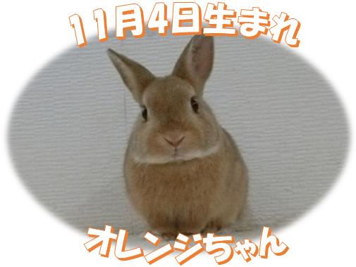 11月4日生まれNDオレンジちゃん