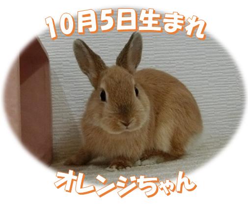 10月5日生まれNDオレンジちゃん
