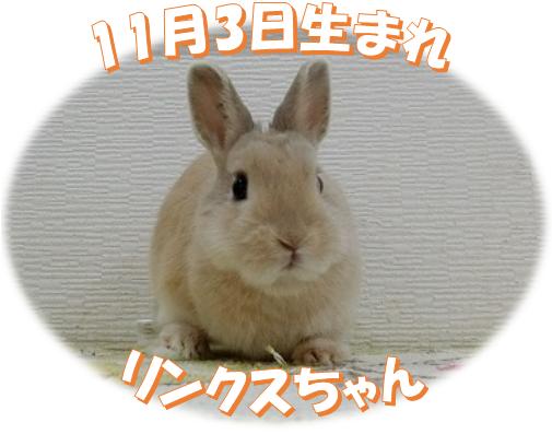 11月3日生まれNDリンクスちゃん