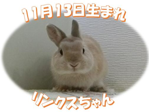 11月13日生まれNDリンクスちゃん