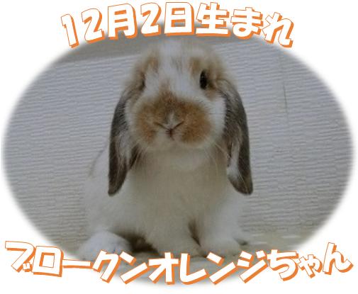 12月2日生まれHLBKNオレンジちゃん