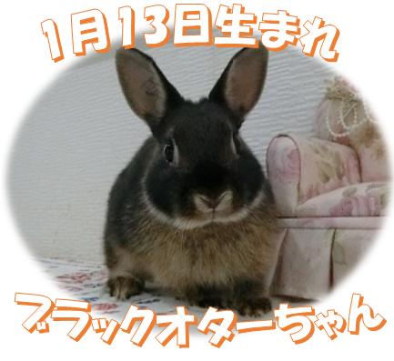 1月13日生まれNDブラックオターちゃん