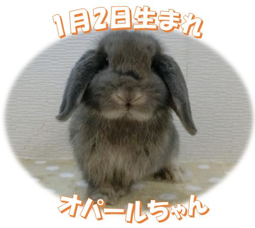 1月2日生まれHLオパールちゃん