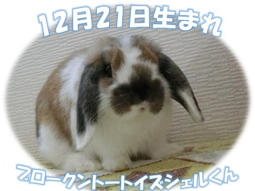 12月21日生まれBKNトートイズシェルくん