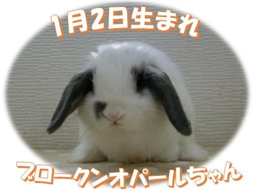 1月2日生まれHLブロークンオパールちゃん
