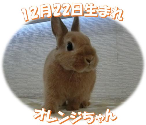 12月22日生まれNDオレンジちゃん