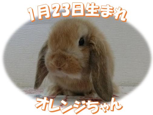 1月23日生まれおれんじちゃん