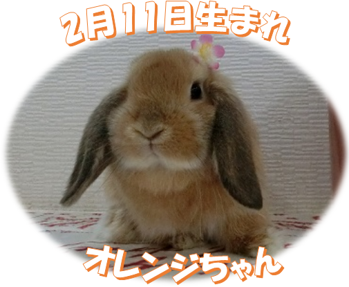 2月11日生まれHLオレンジちゃん
