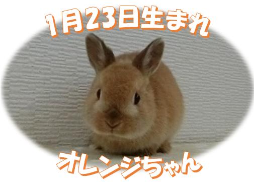 1月23日生まれNDオレンジちゃん