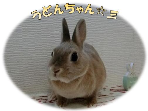 うどんちゃん