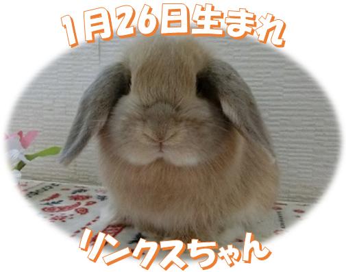 1月26日生まれHLリンクスちゃん