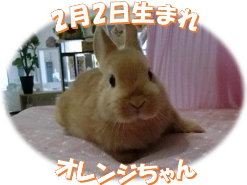 2月2日生まれNDオレンジちゃん