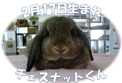 2月17日生まれHLチェスナットくん