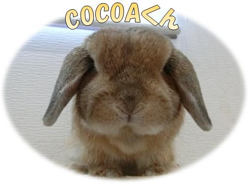 COCOAくん