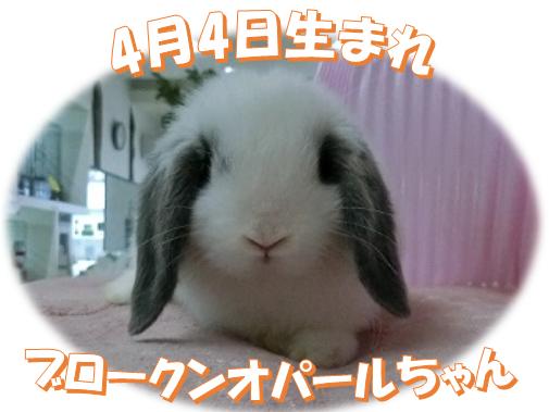 4月4日生まれブロークンオパールちゃん