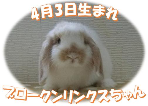 4月3日生まれBKNオパールちゃん