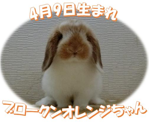 4月9日生まれHLBKNオレンジちゃん