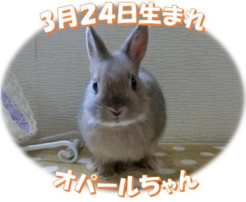 3月24日生まれNDオパールちゃん